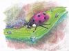 08 - Lady(bug) in Pink/Dáma v růžovém